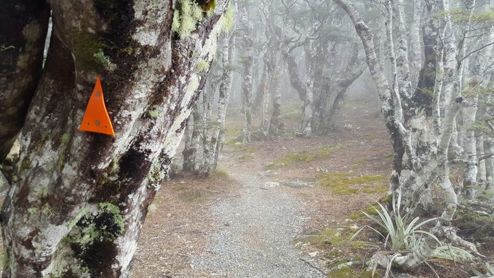 A tramping trail on Mount Robert, Nelson Lakes.