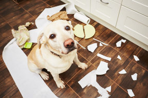 Bored and stressed dogs can cause damage to property and themselves.