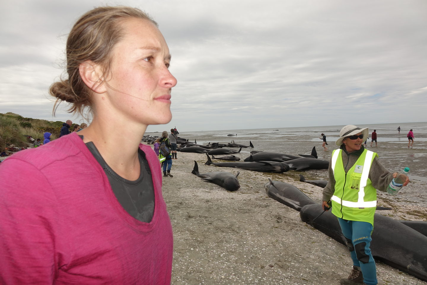 """I don't recall ever being at a stranding of this magnitude,"" said Bridie Griffiths after hundreds of whales were stranded near Farewell Spit in February."