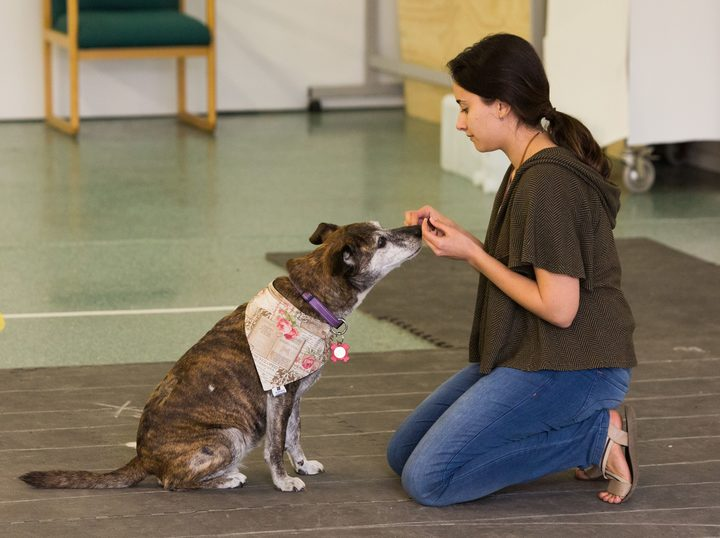 Amalia Bastos and a dog having its empathy tested at the Clever Canine Lab.