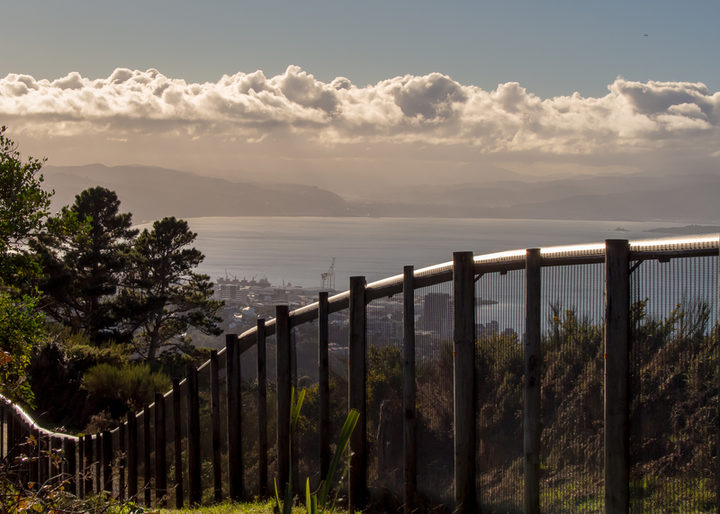 Zealandia sanctuary in Wellington is surrounded by a predator-proof fence.