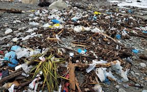 Tens of thousands of plastic bags have been unearthed on a West Coast beach.