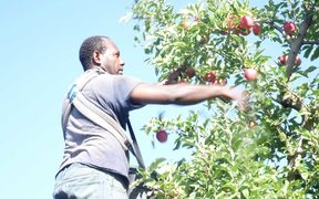 A ni-Vanuatu doing seasonal work in New Zealand under the Recognised Seasonal Employer scheme.