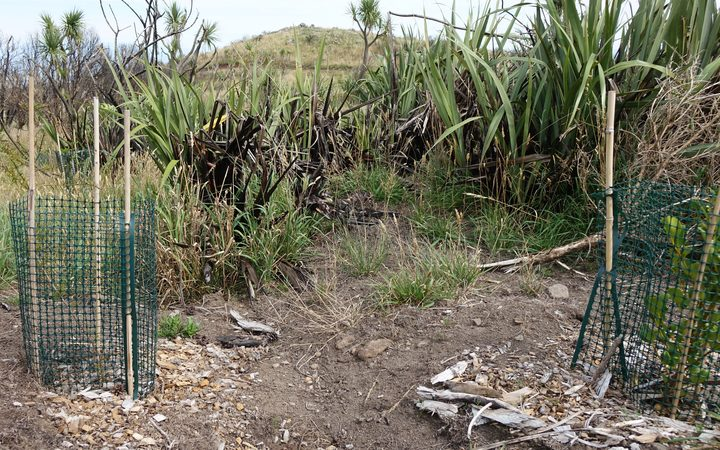 Volunteers have been planting in fire damaged areas of Port Hills.