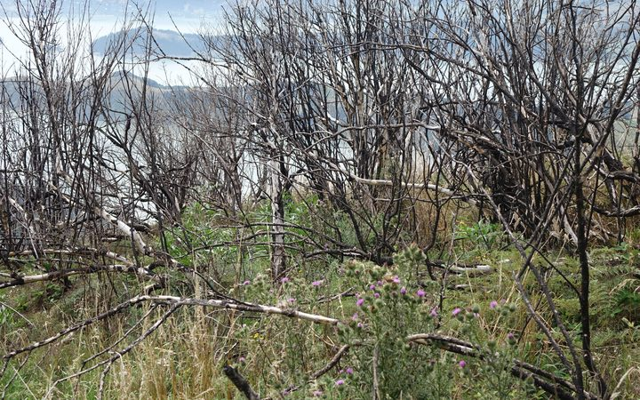 Port Hills one year on from the devastating fires.