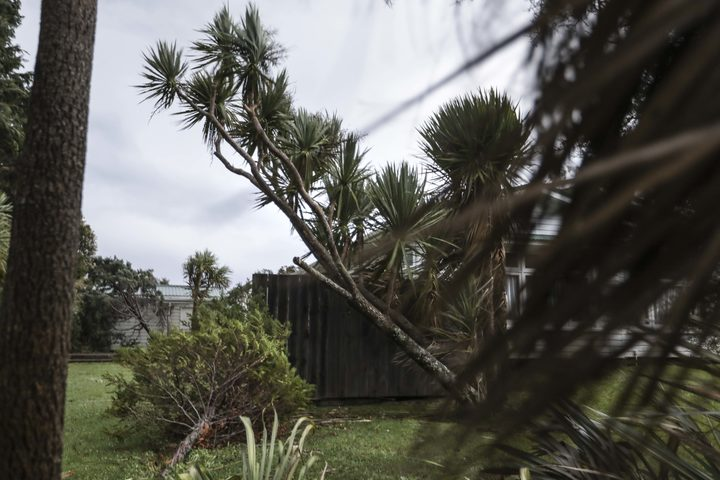 New Zealand storm disrupts harvest