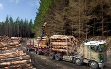 The logging industry says the FTA with China isn't working.