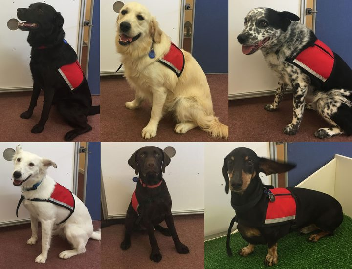Ruby, Ella and Katie (top row), and Luna, Trevor and Vincent (bottom row) are all pet dogs that have been trained to detect fish odour in Waikato University's Dog Lab.