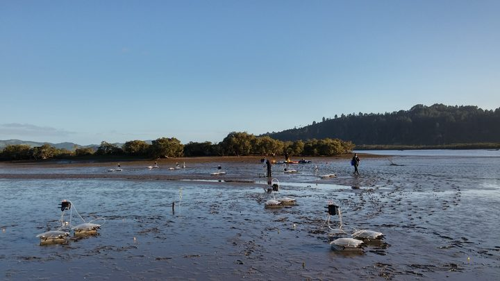 Tipping Points experiments are taking place in 15 estuaries around New Zealand.