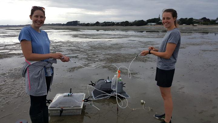 Rebecca Gladstone-Gallagher and Steph Mangan suck out water samples from a benthic chamber at Clark's Beach on Mankau Harbour.