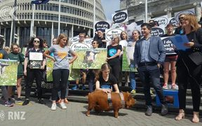 110,000 sign petition to ban pig farrowing crates: RNZ Checkpoint