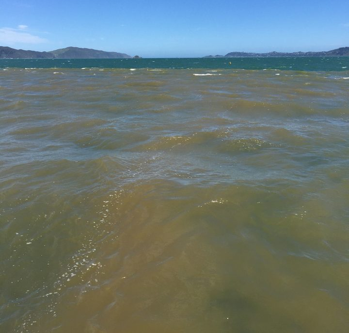 Following a flood, muddy freshwater can cover Wellington harbour, but it is just a shallow layer, one to three metres deep.