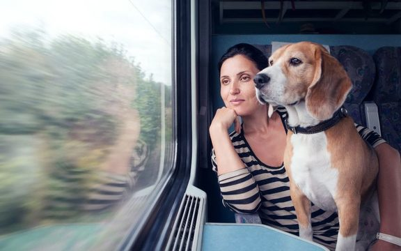 Dogs will now be able to ride on Wellington's public transport, but unlike this pooch they will have to be in a container (file photo).