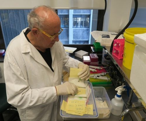 Billy Apple in the lab at the Liggins Institute sorting through samples.