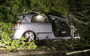 A tree landed on a car on New North Road in Morningside, Auckland.