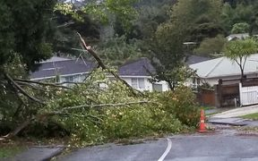 A tree downed in Titirangi by the storm overnight.
