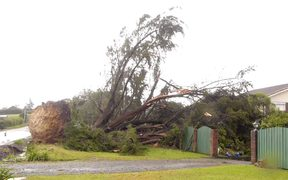 Some of the storm damage caused by the wild winds around Auckland.