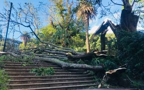A tree downed by the weather in Albert Park.