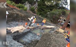10m waka unearthed during road build