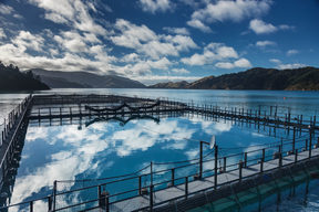 A NZ King Salmon farm in the Tory Channel.