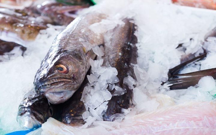 Hoki fish.