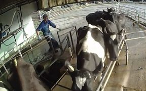 A screenshot of the video released by Farmwatch.