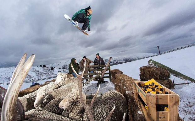 A snowboarder jumps over a temporary pen of sheep - but snow on the hills may not make some farmers jump for joy.