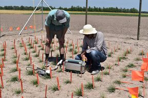 The trial site in the mid-west of the United States. Dr Luke Cooney (left) of AgResearch and using equipment that measures photosynthesis in the grass. 2017.