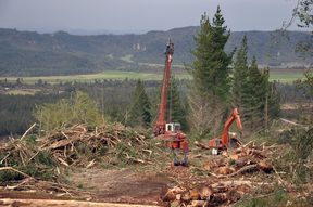 Logging of pinus radiata, westland, New Zealand.