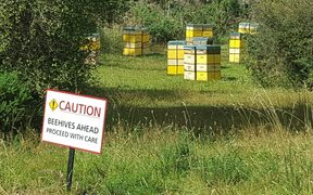 Nelson beehives