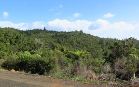 The Coromandel property is a 404 hectare block of land near Tairua