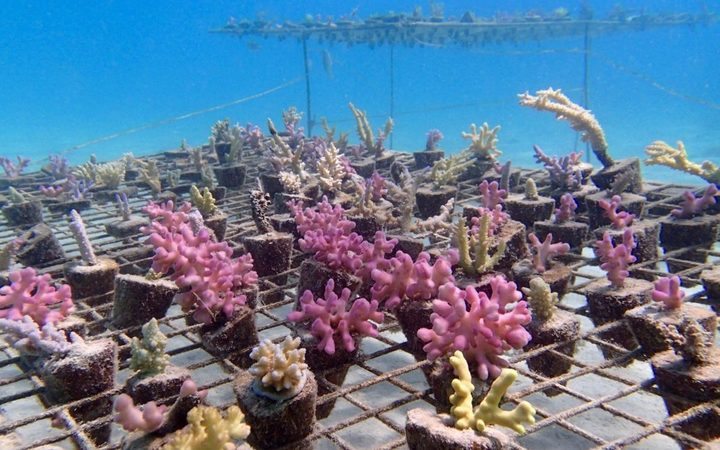 A coral nursery in Fiji