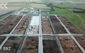 Calls for ban on grain fed beef feedlots