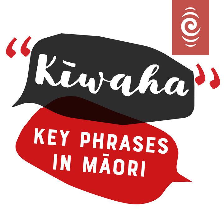 Te reo mori on rnz rnz part 2 te wiki o te reo mori 2018 kwaha key phrases m4hsunfo