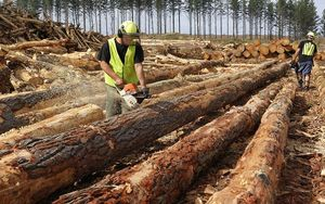 The Council of Trade Unions is to take action against a Tokoroa forestry company over a worker's death.