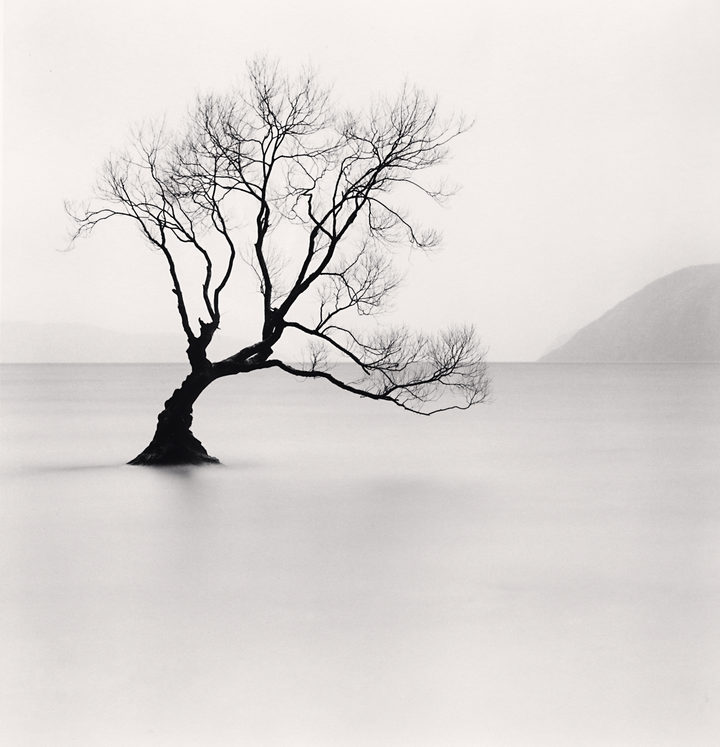 Wanaka Lake Tree, Study 1, Otago, New Zealand. 2013