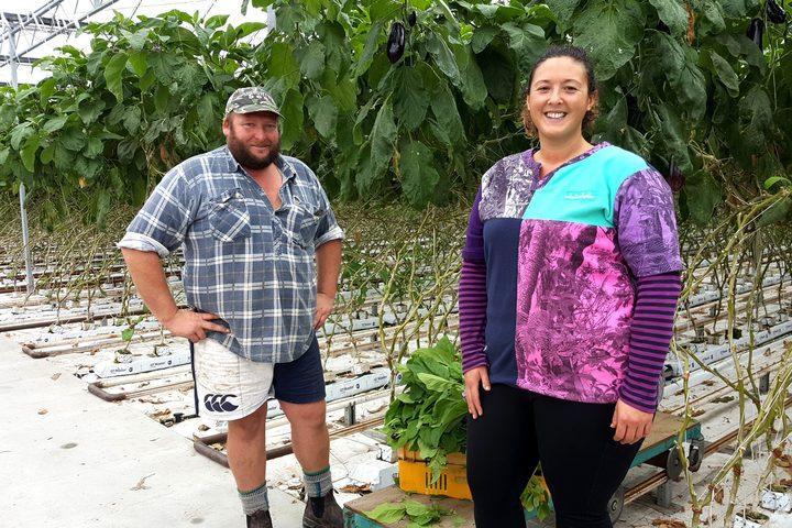 91e5528eacabd Hari Hari Hothouse: the West Coast couple growing eggplant | RNZ