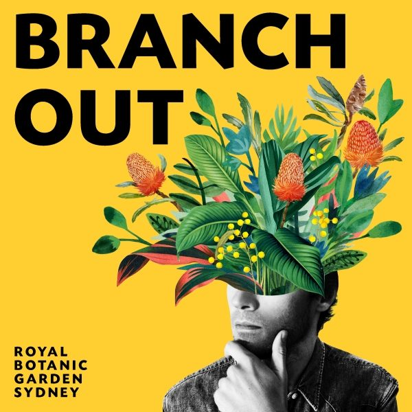 Branch Out Logo (Supplied)