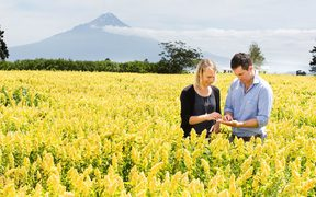 Kate and Hamish Dunlop grow quinoa on part of their sheep and beef farm in Hawera, south Taranaki.