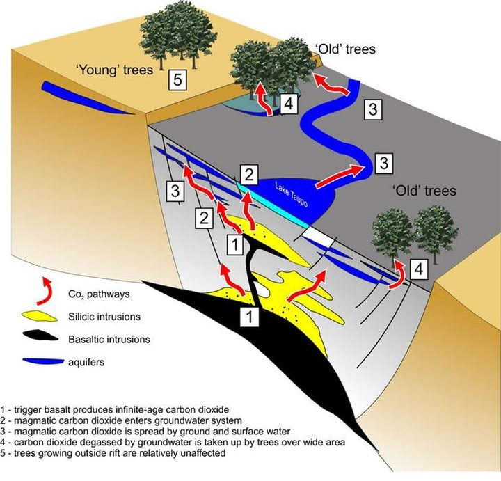 This conceptual image shows how gas from the triggering event, decades before the eruption, works its way into the groundwater system and is eventually incorporated in the wood of the trees that we date.