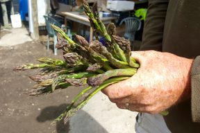 A fistful of asparagus