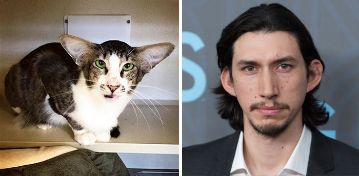 This cat looks so much like Adam Driver/Kylo Ren from Star Wars.