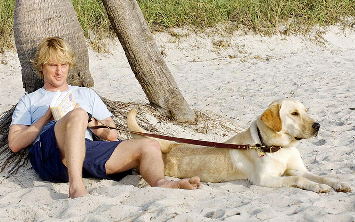 A scene from Marley & Me.