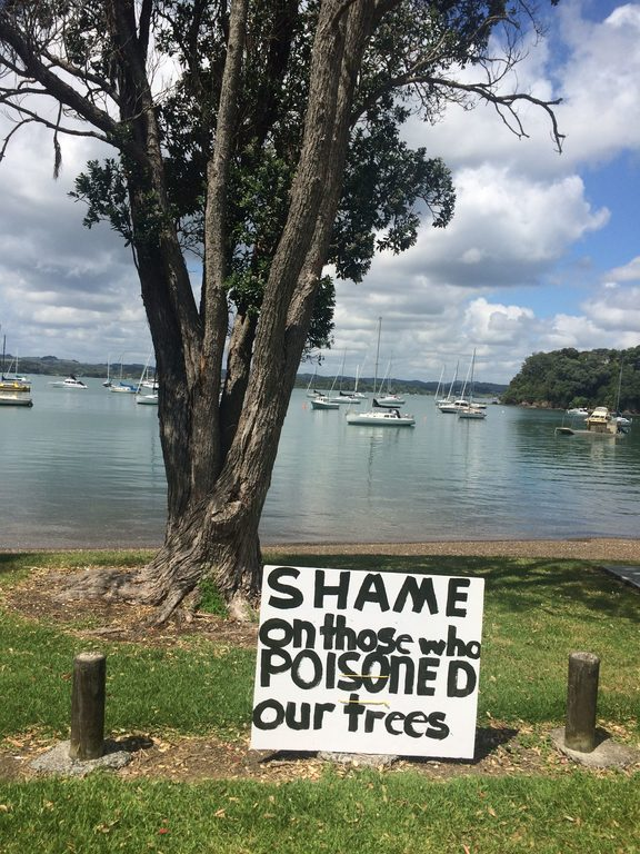A row of pohukukawa trees on the beachfront at Opito Bay have been deliberately poisoned.