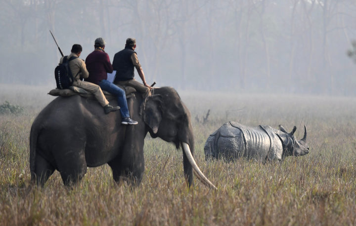Indian forestry officials on an elephant look at a one-horn rhino as they conduct a census of the endangered species at the Pobitora Wildlife Sanctuary, some 45km from Guwahati, March 18, 2018.
