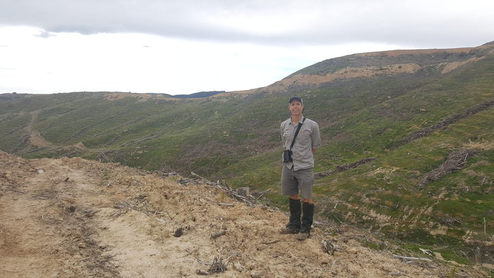 Graham Parker stands in a pine plantation that was harvested two years ago, and is a 'perfect' nesting and hunting territory for NZ falcons.