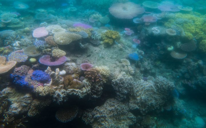 Fossil fuels killing coral - US science agency   RNZ News