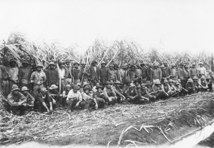 The sugar cane industry in Australia made heavy use of blackbirding victims in the 1870s, although some worked willingly for pay.