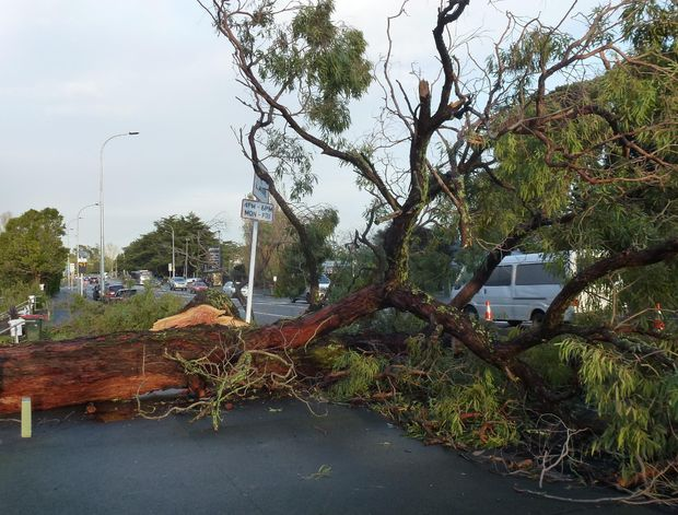 A fallen tree on Great North Road, Western Springs, Auckland.