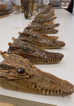 More than 40 stuffed crocodile ornaments were found in a baggage search of a group of passengers.